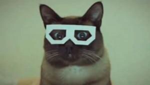 Dubstep hipster kat