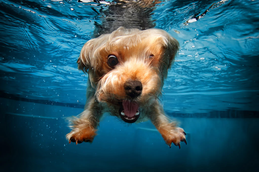 Onderwaterhond