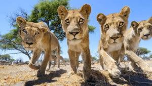 Nieuwsgierig wild van dichtbij