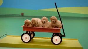 Hond-aangedreven Goldberg-machine