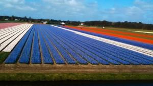 Verschil tussen Holland en Nederland