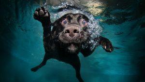 Honden onder water